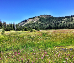 A meadow that sequestered large amounts of soil carbon in the Sierra Nevada | Photo by C.C. Reed.
