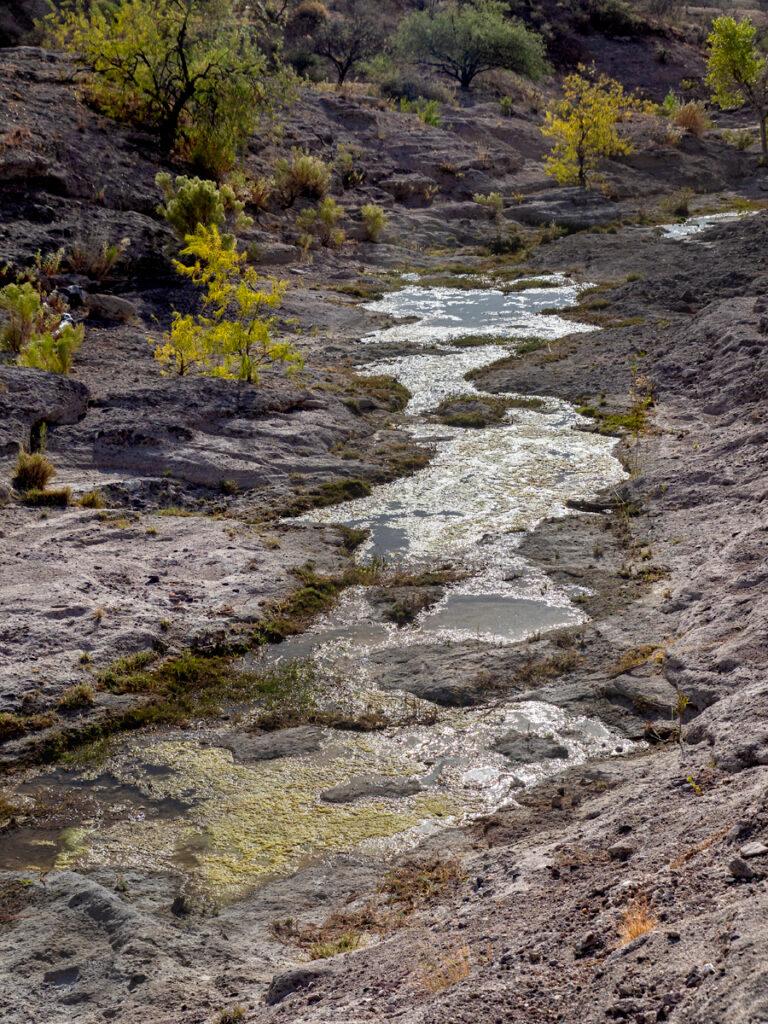 Sonoita Creek, AZ | Photo by Colleen Miniuk-Sperry, http://www.cms-photo.com