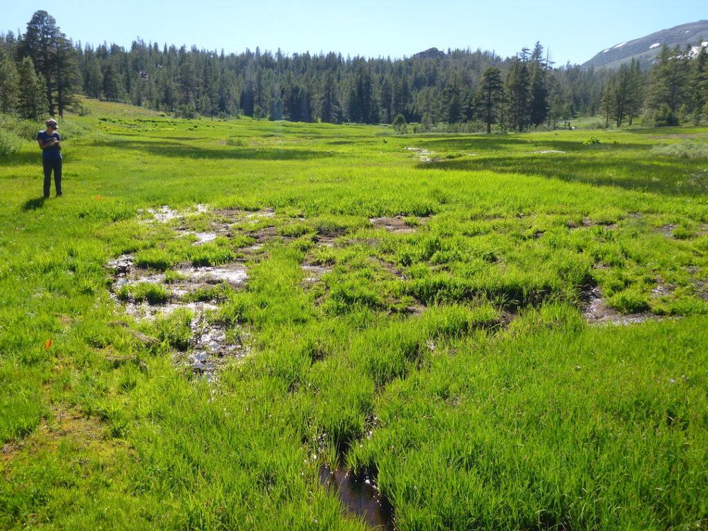 Repaired erosion in Cloudburst Meadow | Photo by Julie Fair