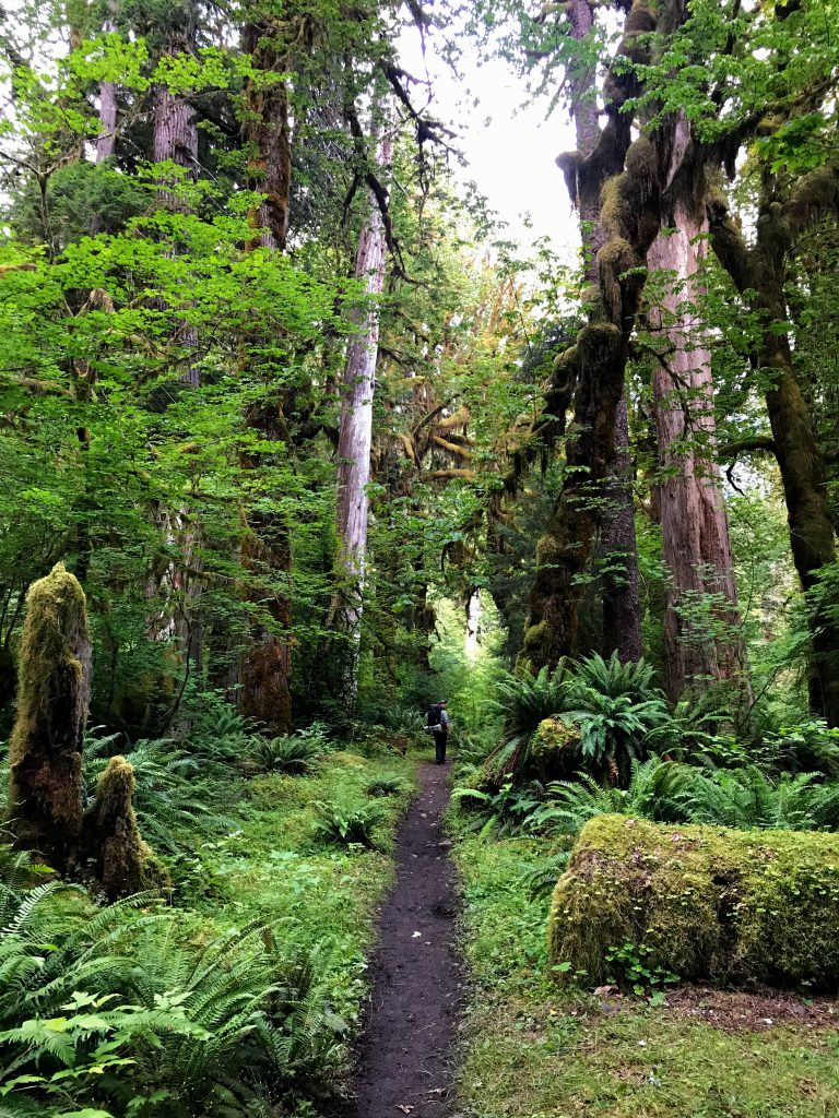 Hiking in the Hoh Rainforest | Photo by Bridget Moran