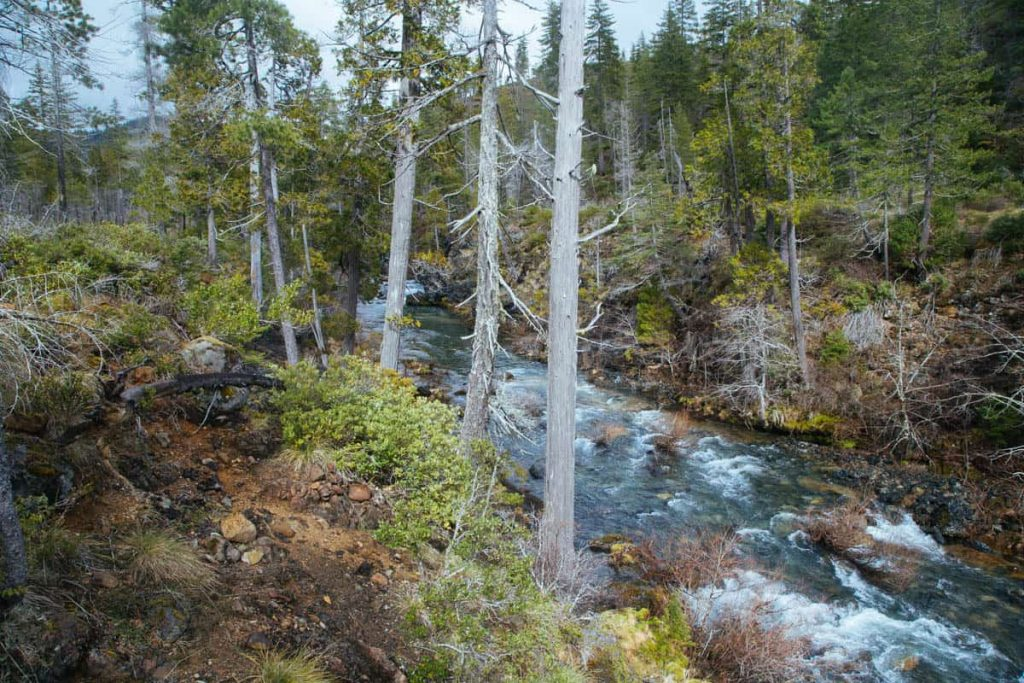 Baldface Creek, OR   Photo by Northwest Rafting Co./Zach Collier